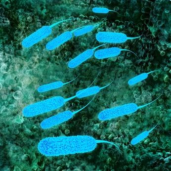 Ecoli bacterium - 3D Render